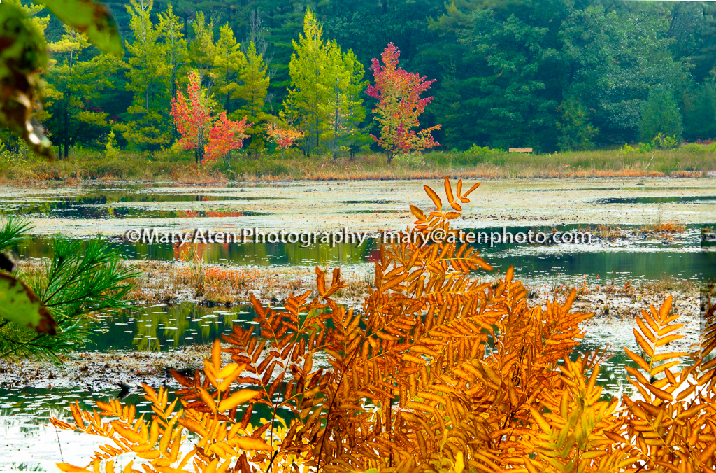 Photo Of Golden Ferns Red Trees And Pond In Fall Mary