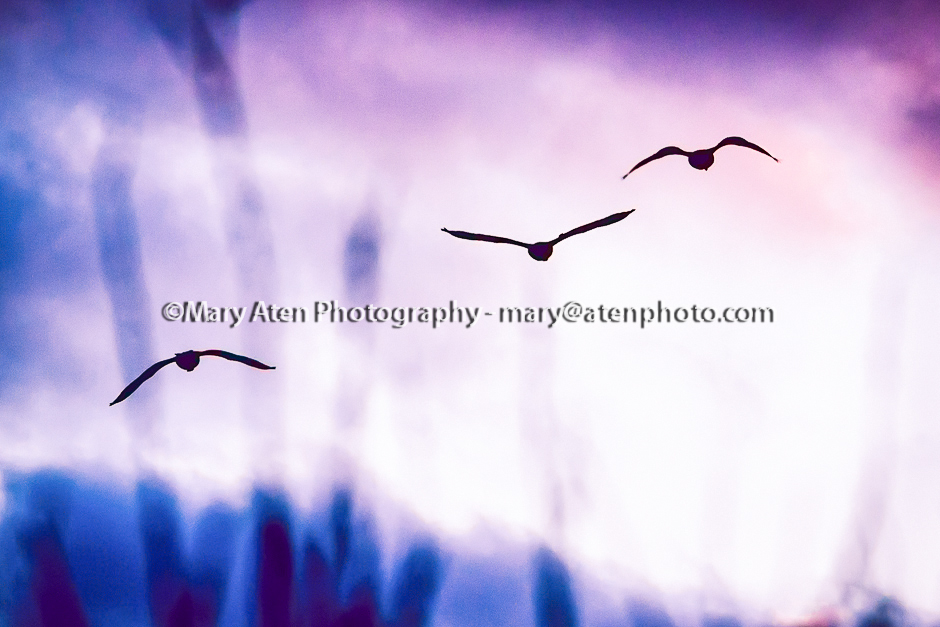 Abstract Geese Photo Flying Geese Silhouetted Against